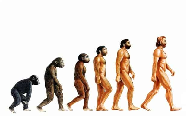 What is the Evolutionary Advantage for Beards